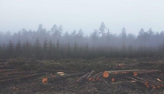 Las especies vegetales destruidas con fines antrópicos, demoran extensos periodos de tiempo en crecer de nuevo, afectando el equilibrio natural del medio ambiente.