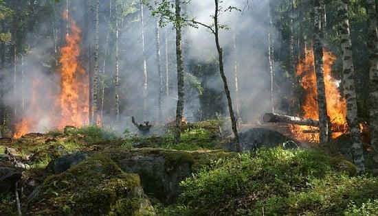 Los incendios forestales pueden provocarse por acciones antrópicas o por fenómenos climáticos y afectan la vida presente en el entorno.