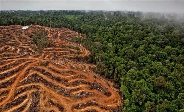 La deforestación afecta los ecosistemas y produce calentamiento global.