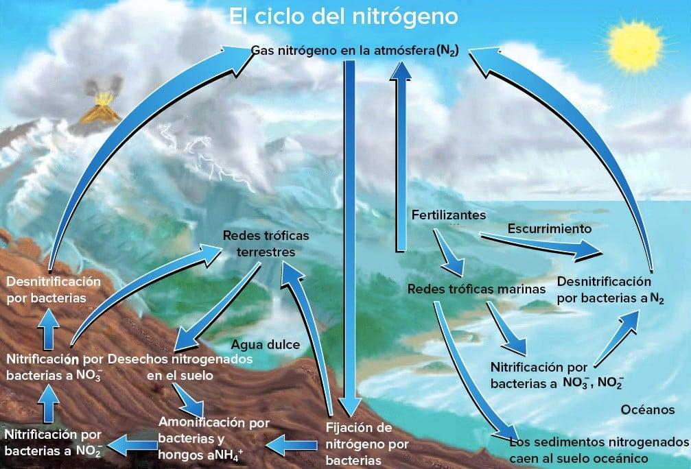 Esquema que representa el ciclo del nitrógeno en ecosistemas terrestres y marinos.